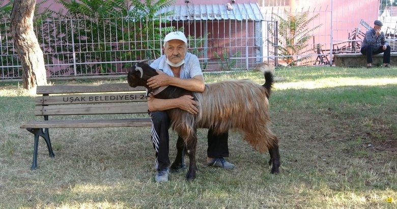 Yalnızlıktan sıkıldı, keçi sahiplendi