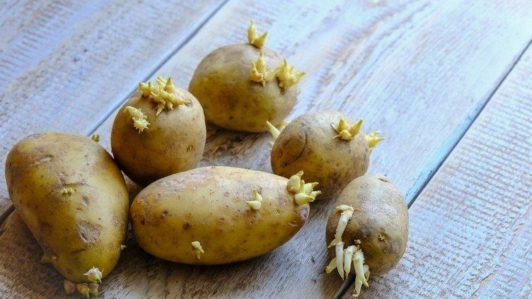 Bu patates ölüme neden olabiliyor!