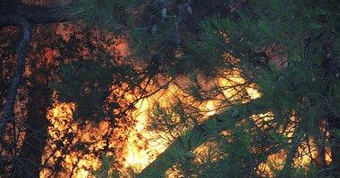 İzmir Foça'daki orman yangını kontrol altına alındı!