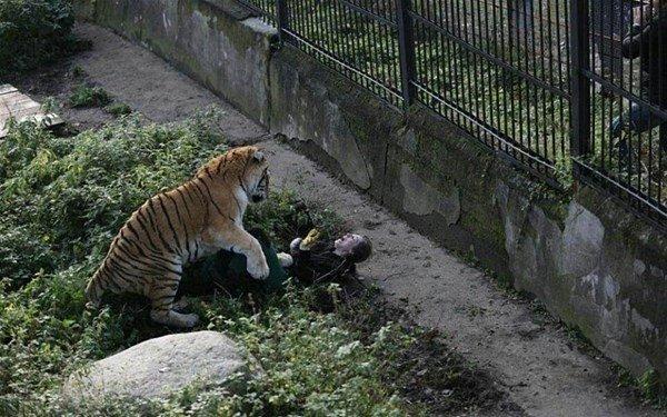 Dehşet dolu anlar! Hayvanlara yiyecek dağıtan kadın...