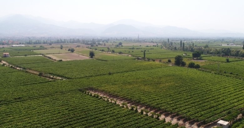Alaşehir'de icradan satılık tarım arazisi