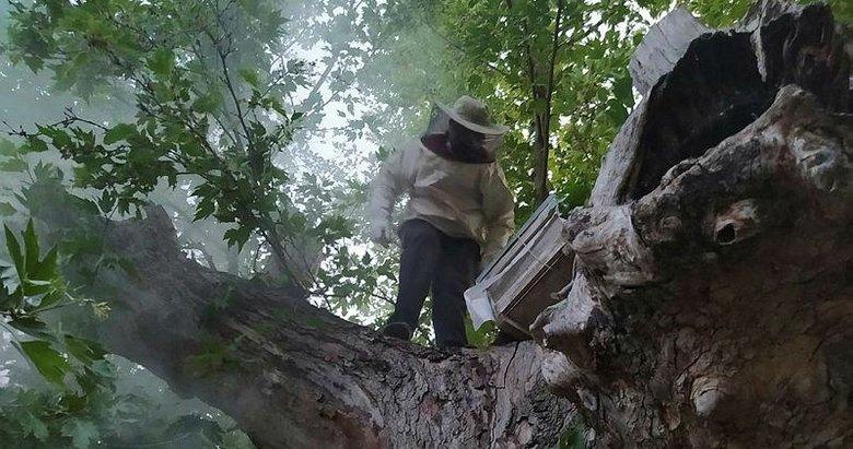 Çiftçilere saldıran arılar kovana alındı