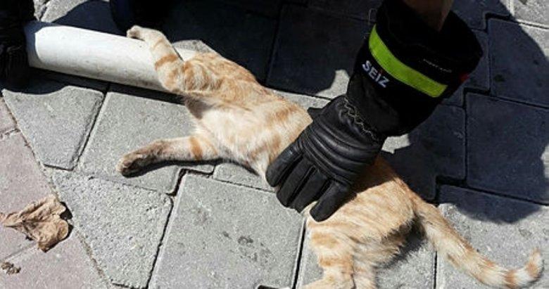Denizli'de çatıdaki boruya sıkışan kedi kurtarıldı