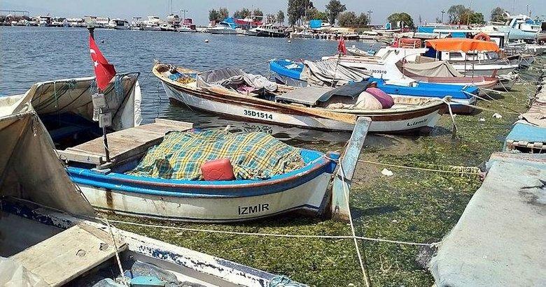 Karşıyaka'da denizin yüzeyini 'deniz marulu' kapladı! Körfez'de kirlilik artınca etkisini gösterdi