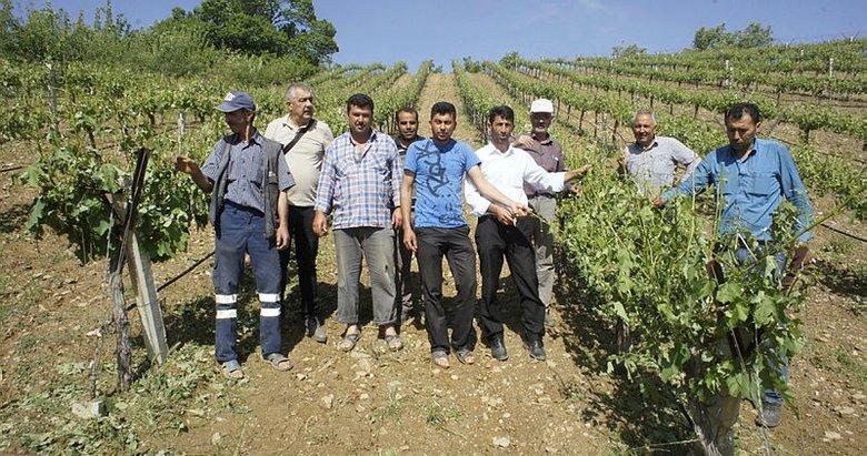 Alaşehir'de dolu ekili arazileri vurdu
