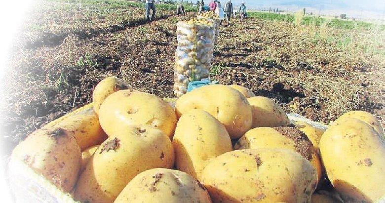 Patates ithalatında amaç pahalılığı önlemek