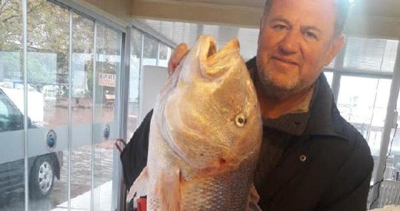 Balıkesir'de oltayla 9 kilo 100 gramlık sinarit yakaladı