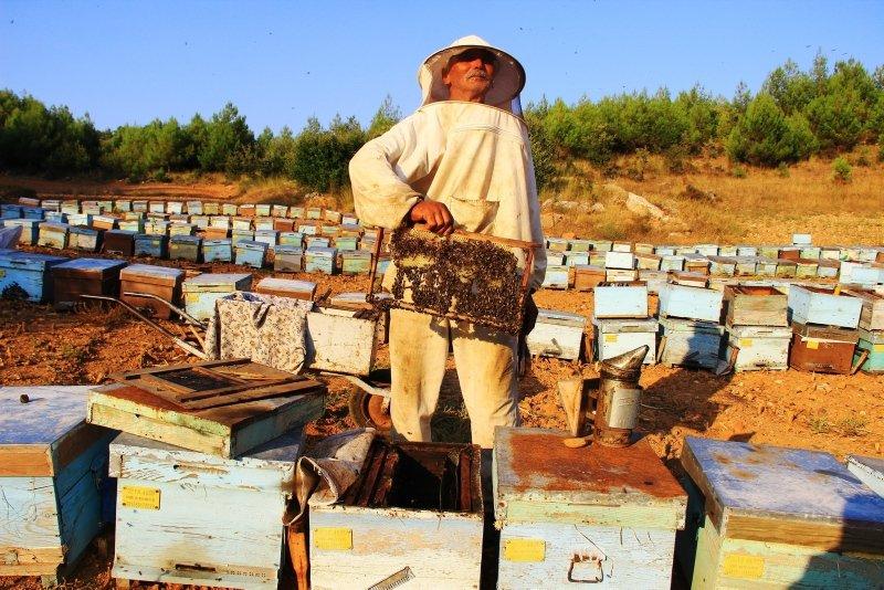 Aydın ve Muğla'da arılar dünyasında savaş başladı! Hasar ciddi boyutlara ulaştı