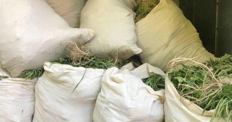 İzmir'de 845 kilogram Hint keneviri yakalandı