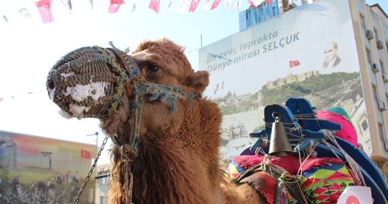 İzmir'de Efes Deve Güreşleri öncesi en süslü deve seçildi