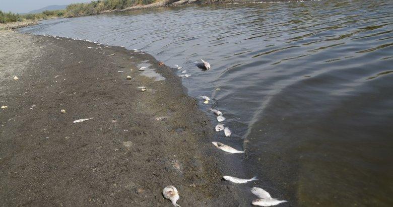 İzmir'de endişelendiren görüntü! Binlerce balık kıyıya vurdu