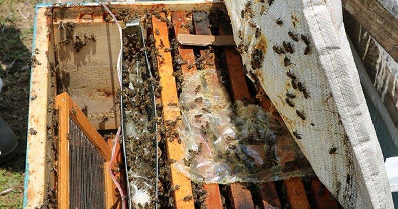 Afyonkarahisar'da arı zehrinin gramı 400 lira