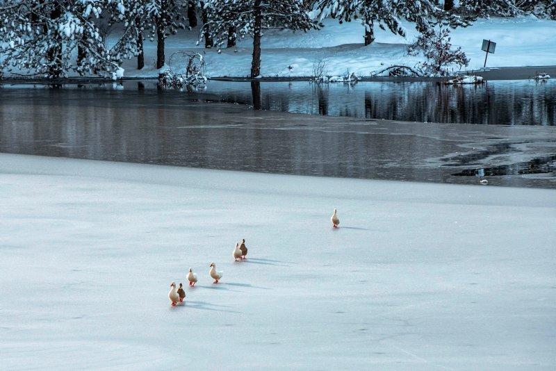 Afyonkarahisar Akdağ Tabiat Parkı'ndaki gölet buz tuttu! Ortaya bu eşsiz manzara çıktı
