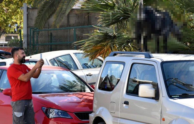 İzmir Bayraklı'da şaşırtan görüntüler! Görenler telefonuna sarıldı