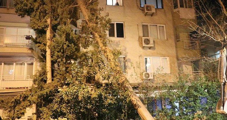 İzmir'de şiddetli rüzgar kabusu! Ağaçlar devrildi, çatılar uçtu, araçlar zarar gördü
