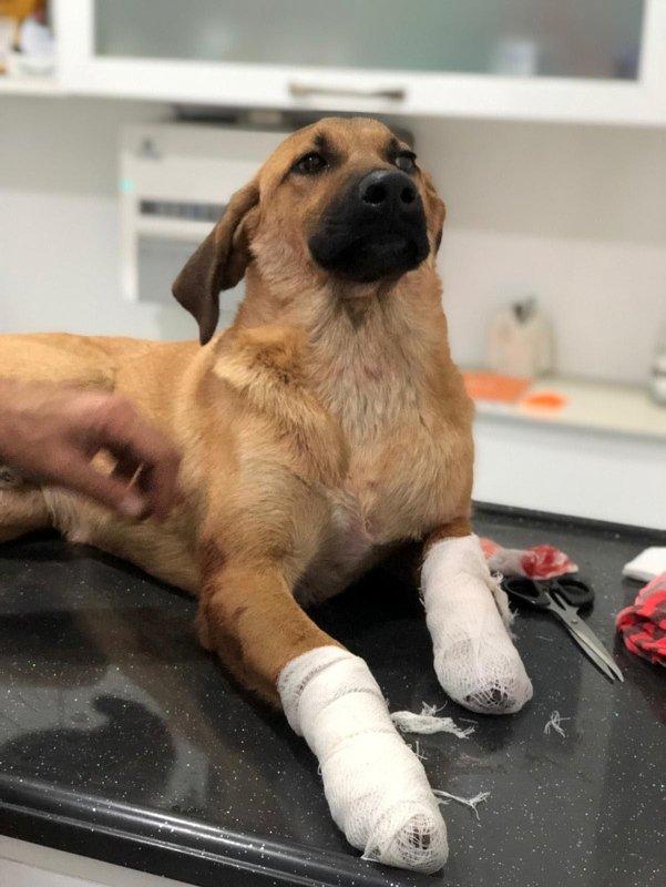 İzmirde yavru köpeği bacaklarından vurdular