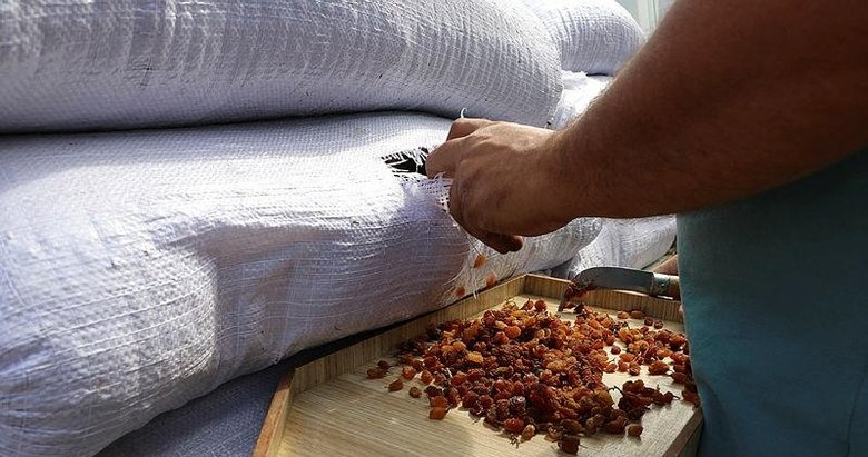 AK Partili Hızlı: Kuru üzüm bedelleri 7-10 gün içinde ödenecek