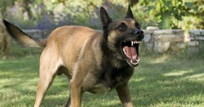 Önce köpek saldırdı sonra sahibi bıçakladı