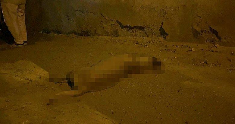Aydın'da kayınbiraderinin köpeğini vuran kişi gözaltına alındı