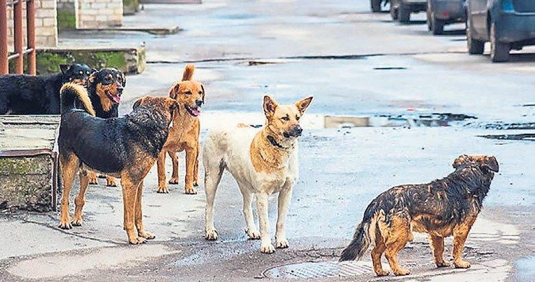 Buca'da sokak köpekleri vatandaşlara saldırıyor