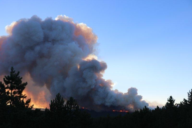 Kütahya Tavşanlı'da orman yangını! Köylüler seferber oldu