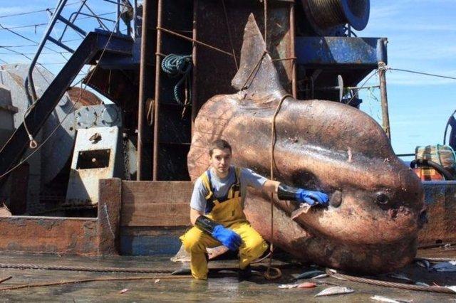 Balıkesir'de oltasına öyle bir şey takıldı ki... Görenler hayrete düştü! İşte dünyadaki en ilginç hayvanlar...