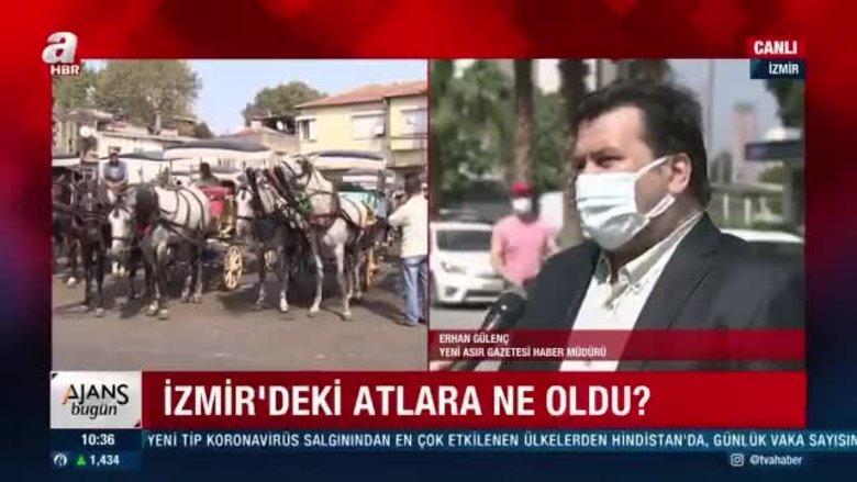 İzmir'in atları Ankara'da kobay oldu! Yeni Asır ortaya çıkardı