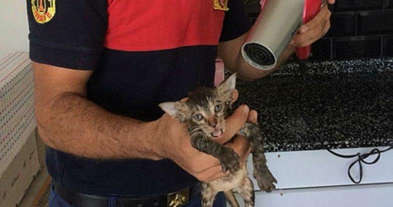 Muğla'da yağmur suyu borusuna sıkışan kedi kurtarıldı