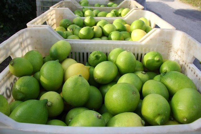 Limon dilimleriyle uyumanın faydaları nelerdir?