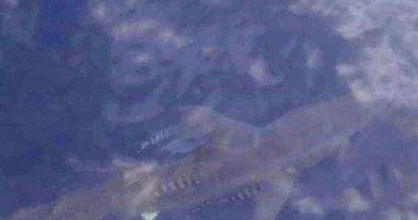 Marmaris açıklarında köpek balığı şaşkınlığı