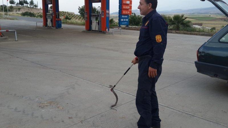 Hareket halindeki otomobilden yılan çıktı