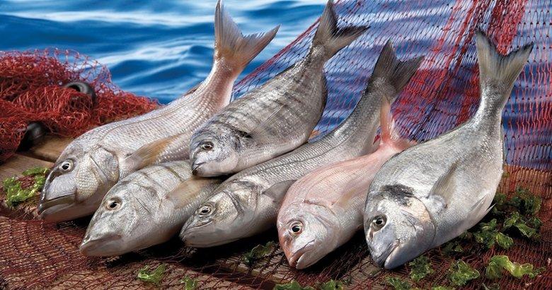 Egeli balıkçılardan ihracat başarısı