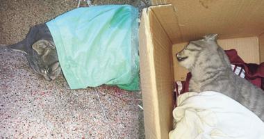 Konak Belediyesi kedileri ölüme terk etti