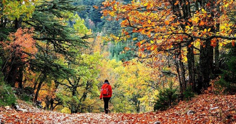 Sonbaharın renklerinden görsel şölen! İşte birbirinden güzel kartpostallık sonbahar fotoğrafları...