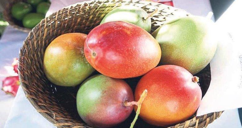 Yeni gözde tanesi 50 liraya satılan mango