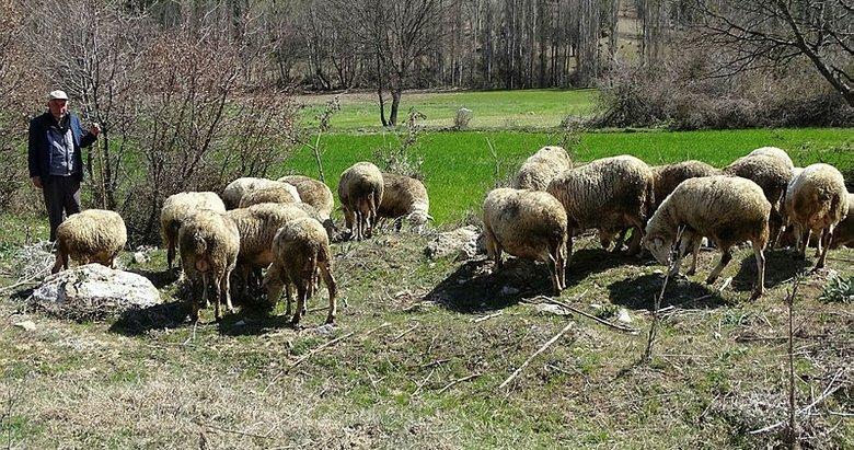 Kütahya'da, hayvanlarda çiçek hastalığı çıktı: 1 ilçe, 8 köy koruma ve gözetim bölgesi ilan edildi