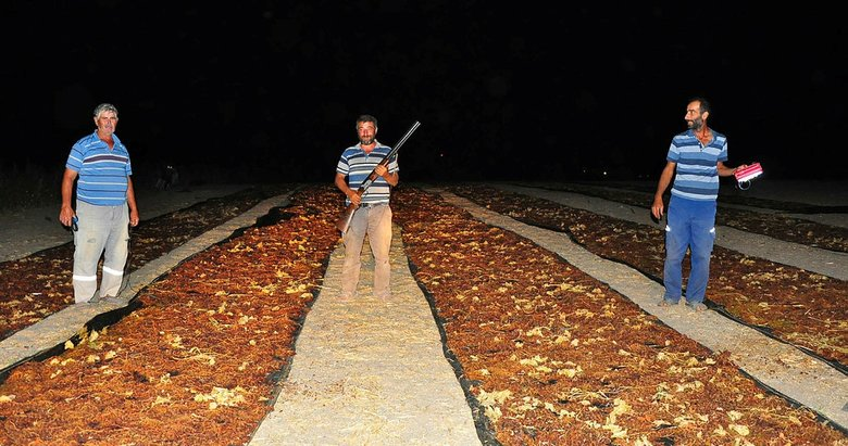 Manisa'da tüfekli üzüm nöbeti