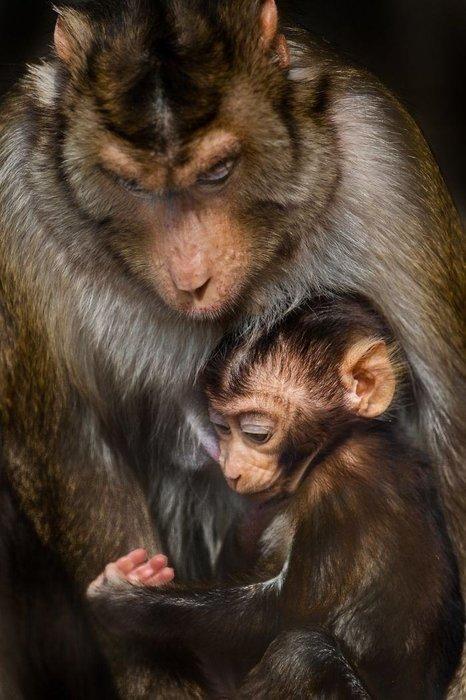 Hayvanların dünyasından iç ısıtan fotoğraflar