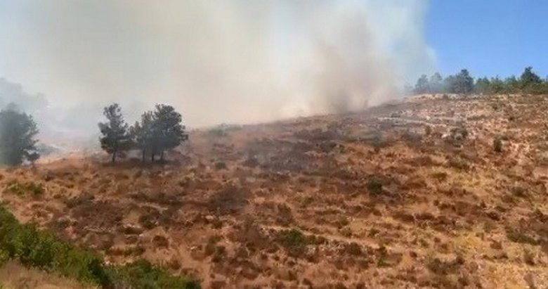 Bodrum'da orman yangını