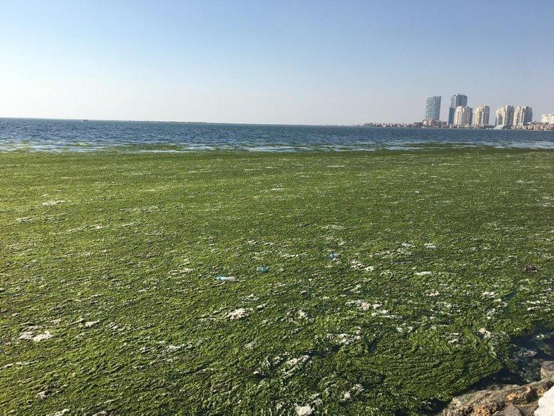 İzmir Körfezi'nde ürküten görüntü