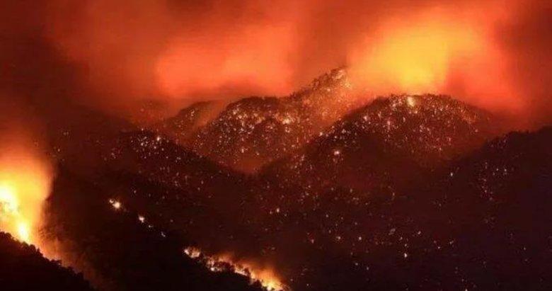 Orman Genel Müdürü açıkladı: Muğla ve Antalya'da ormanların sadece yüzde 5'i yangınlardan etkilendi