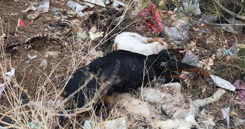 Uşak'ta çöplükte 20 köpek ölüsü bulundu