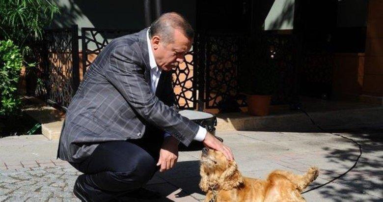 Başkan Recep Tayyip Erdoğan talimat verdi Meclis'e geldi! Hayvana işkenceye af yok