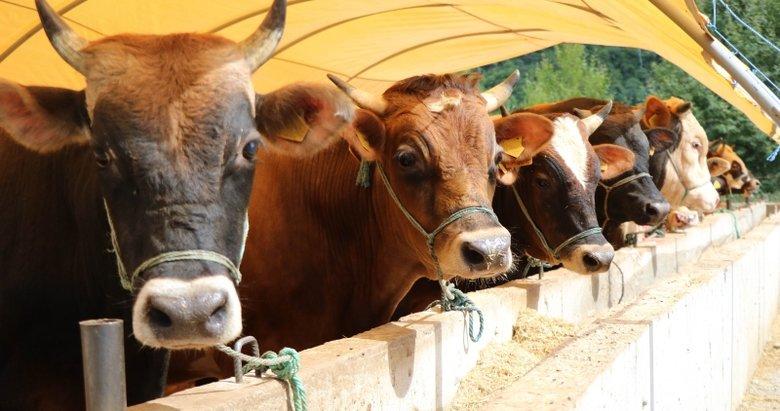 Kurbanlık hayvandan koronavirüs bulaşır mı? Bilim Kurulu üyesi yanıtladı