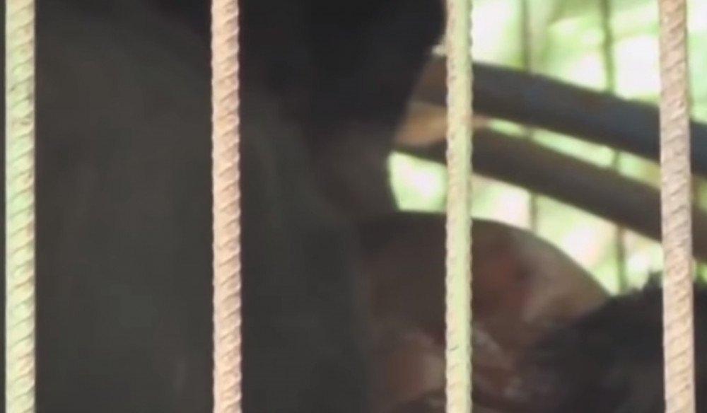 Dehşete düşüren görüntü! Kafese giren adam ayıya yem oldu... İşte o anlar