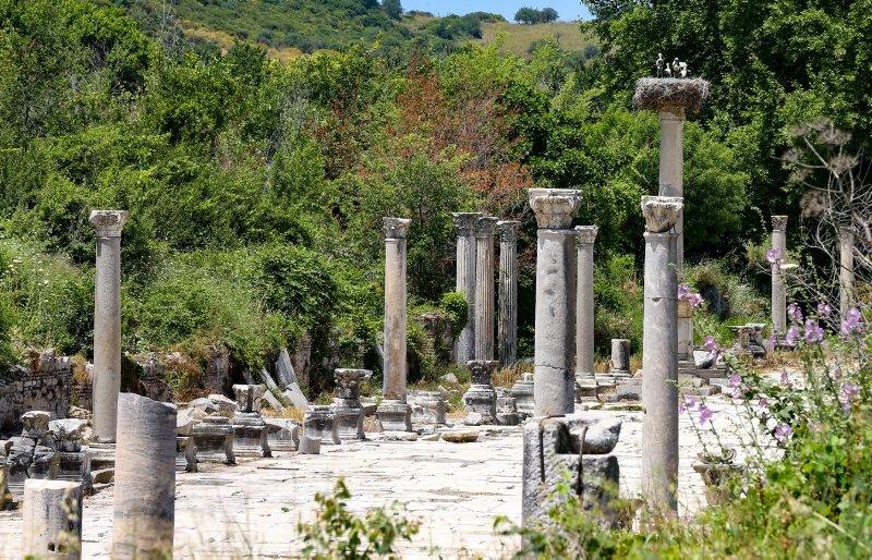 Efes Antik Kenti'nin leylekleri ilgi çekiyor