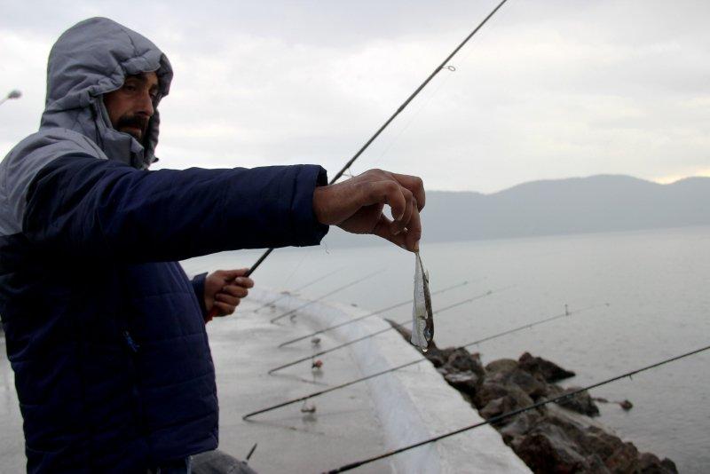 Balıkçıların korkulu rüyası! Balon balığını kediler bile yemiyor
