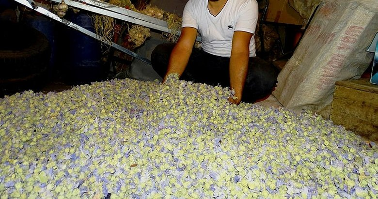 Hatmi çiçeği şifa deposu! Hatmi çiçeğinin faydaları nelerdir?