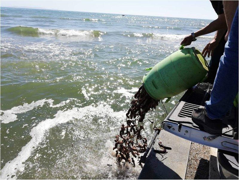Aydın'da yasa dışı ava ceza yağdı