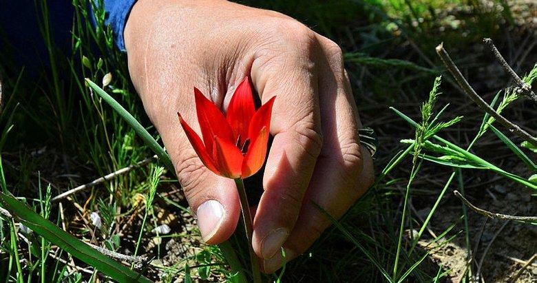 Bu çiçeği koparmanın cezası 80 bin 460 TL